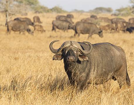 Explore Kruger National Parks Big 5
