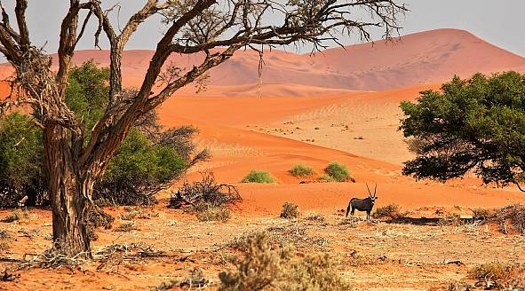 afrika rejser herning